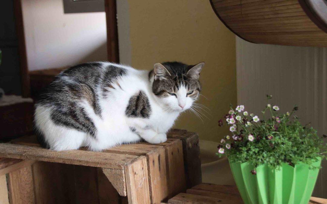 Katzen suchen ein zu Hause